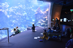 Field Trip to the California Academy of Sciences